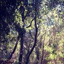 יער הפיות