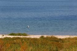 חניון רותם שיזף חוף שקט לוגו