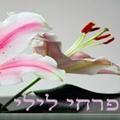 פרחי לילי לוגו