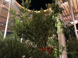 את הגן באמצע המסעדה