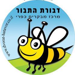 דבורת התבור לוגו